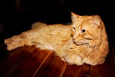 cozzetto_cats-14