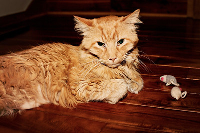 cozzetto_cats-4
