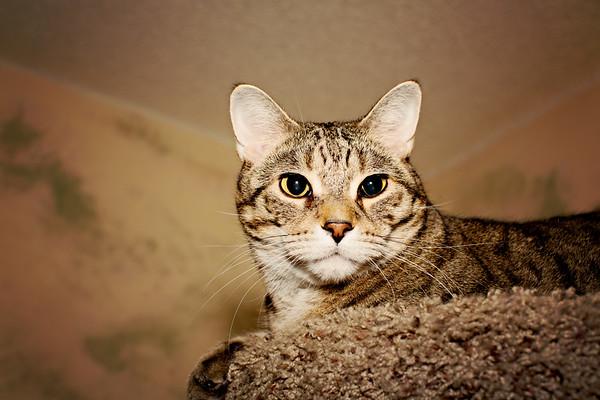 cozzetto_cats-7