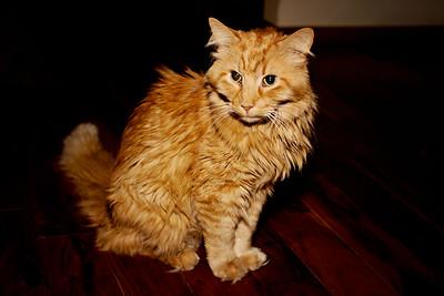 cozzetto_cats-20