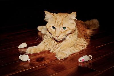 cozzetto_cats-2