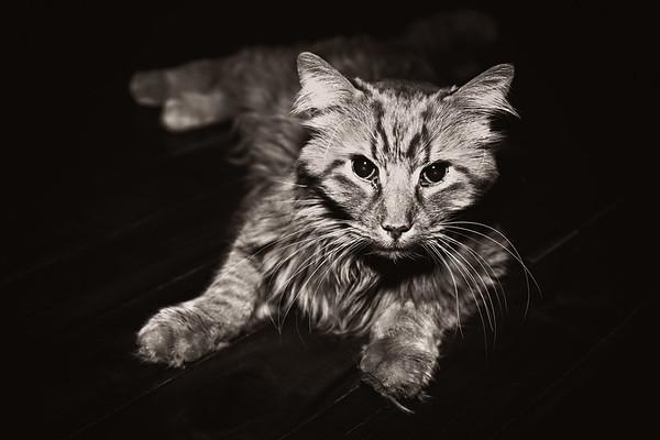 cozzetto_cats-1