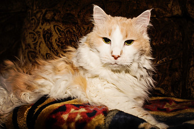 cozzetto_cats-10