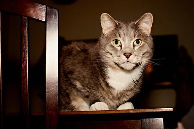 cozzetto_cats-21