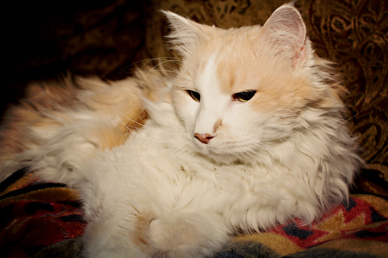 cozzetto_cats-11