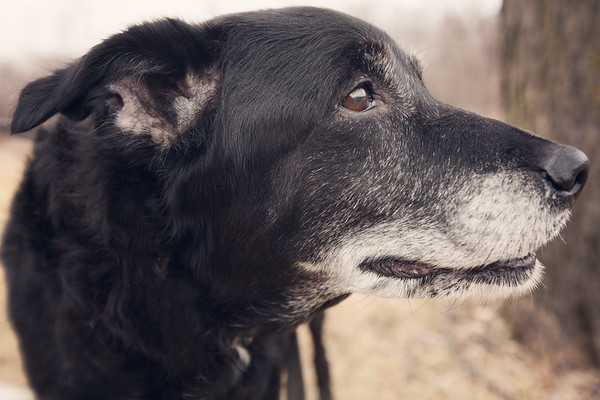 gunderson_dogs2017-11