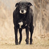 gunderson_dogs2017-15