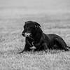 gunderson_dogs2017-20
