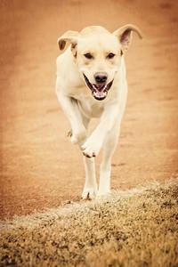 gunderson_dogs2017-19