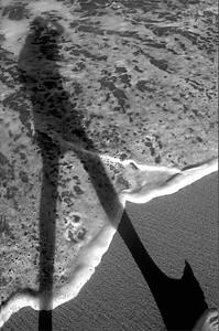 Sombra de orilla