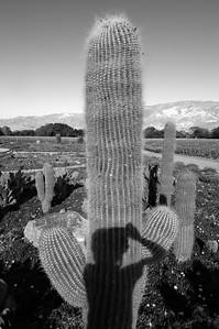 Cactus sombra