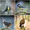 Collage vogels2