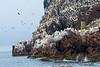 Jan van Genten Bass Rock Schotland