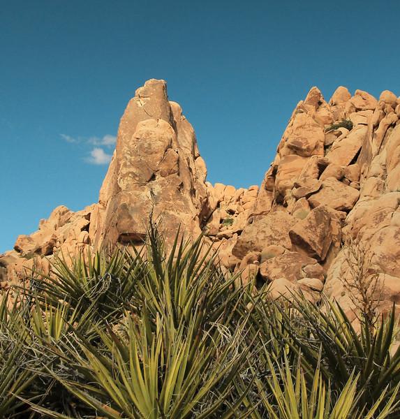 Yucca & Rocks, Indian Cove, JTNP