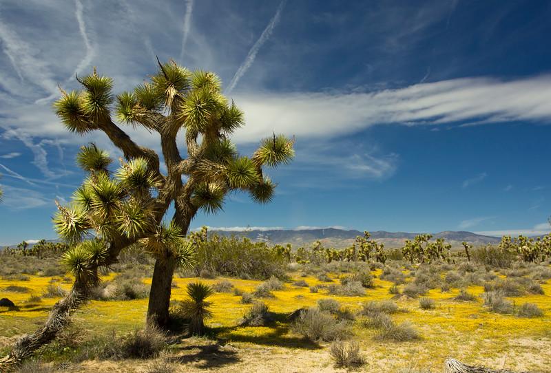 Arthur B. Ripley Desert Woodland State Park, Lancaster