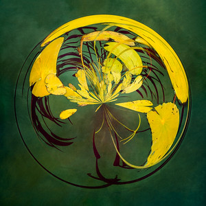 Seeing in Circles , Golden Lillies