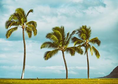 Palms Vintage