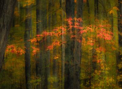 Silken Forest