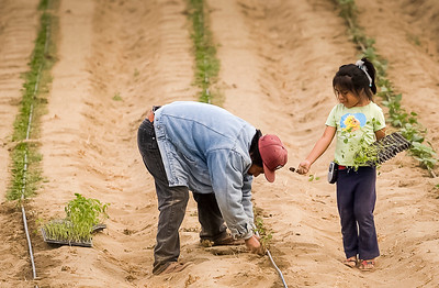 An immigrant and his daughter plant a field.