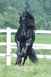 Stallion Fever