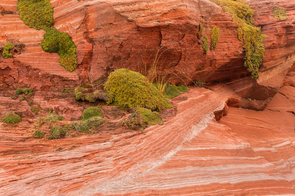 Canyon  in the shade, White Pocket, Vermillion Cliffs National Monument, Arizona