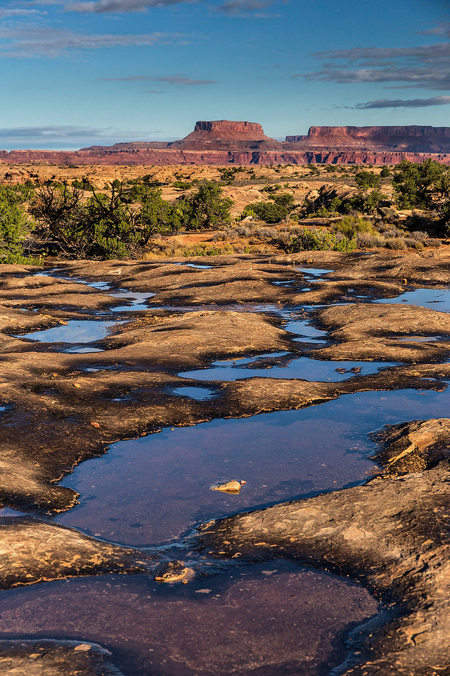 Potholes the morning after the rain, Needles Unit of Canyonlands National Park, Utah