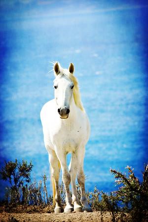 { wild wild horse }