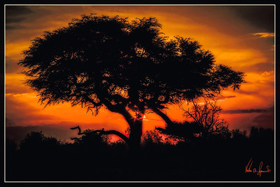 """""""SUNSET AT THE WATER HOLE"""""""