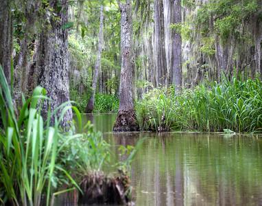 Athafalaya Swamp
