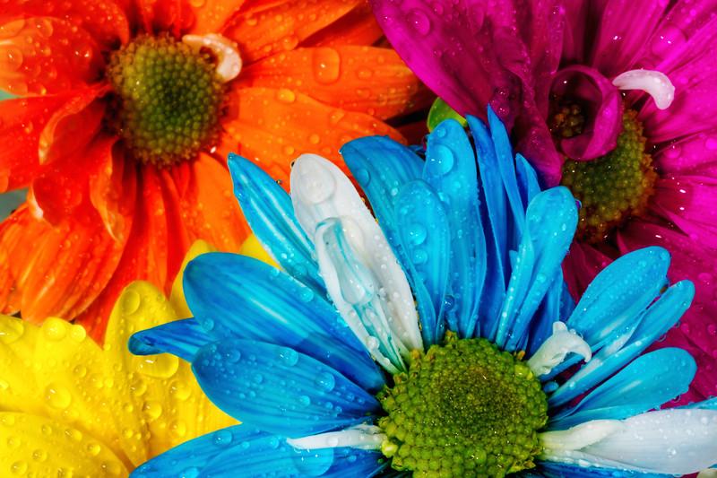 Studios Florals
