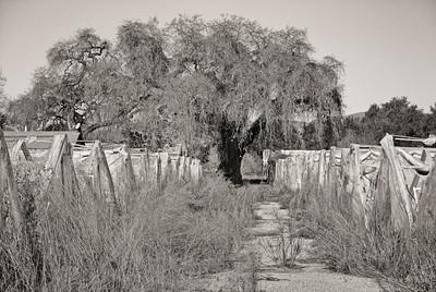 Greenhouse Ruins
