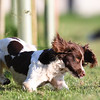2018 Badminton Horse Trials Day 5 May 6th