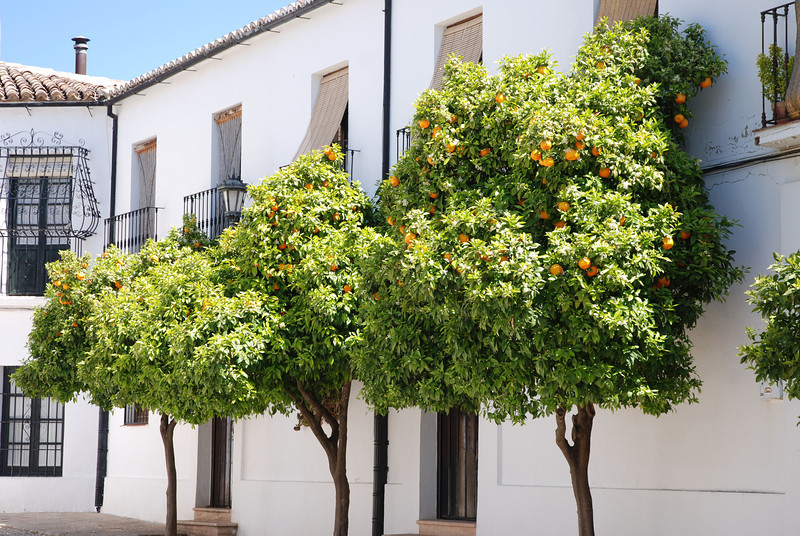 ANDALUSIE 18