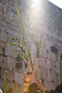 Sukkot - Prayer 201