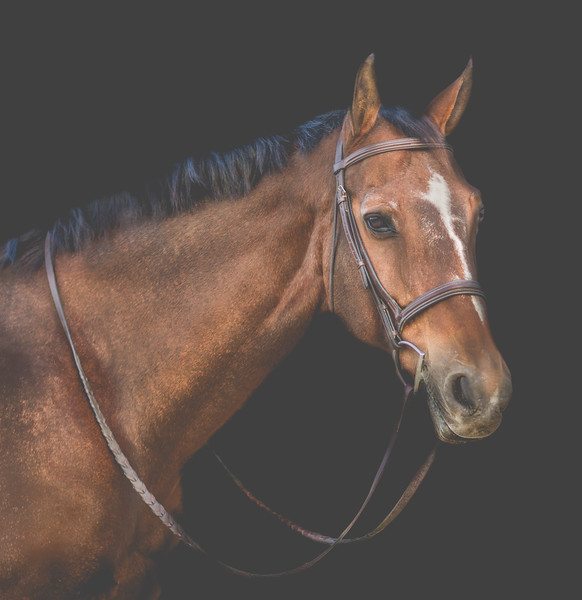 Equine head shot