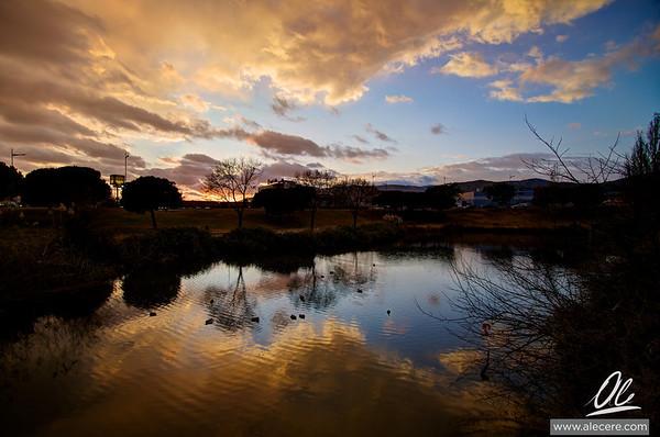 Ducks love sunsets