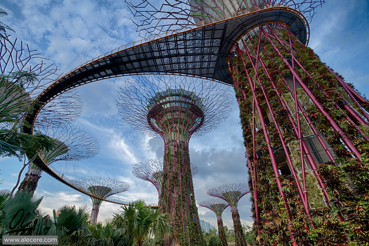 Skywalk in the supertrees