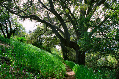 Warner Springs Greens