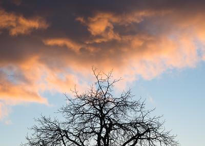 Walnut Sky