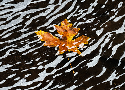 Fall Foam I