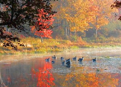 Briscoe Lake (33026717)