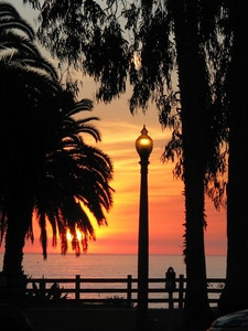 Santa Monica 1156 (32978998)