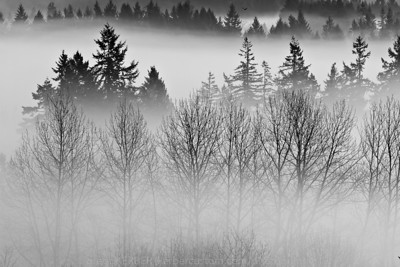 "Layers in Fog (Jan. 2011 Mini Challenge winner...PDX Photography Group, ""Photo of the Day"", Aperture Academy, May 2, 2011)"