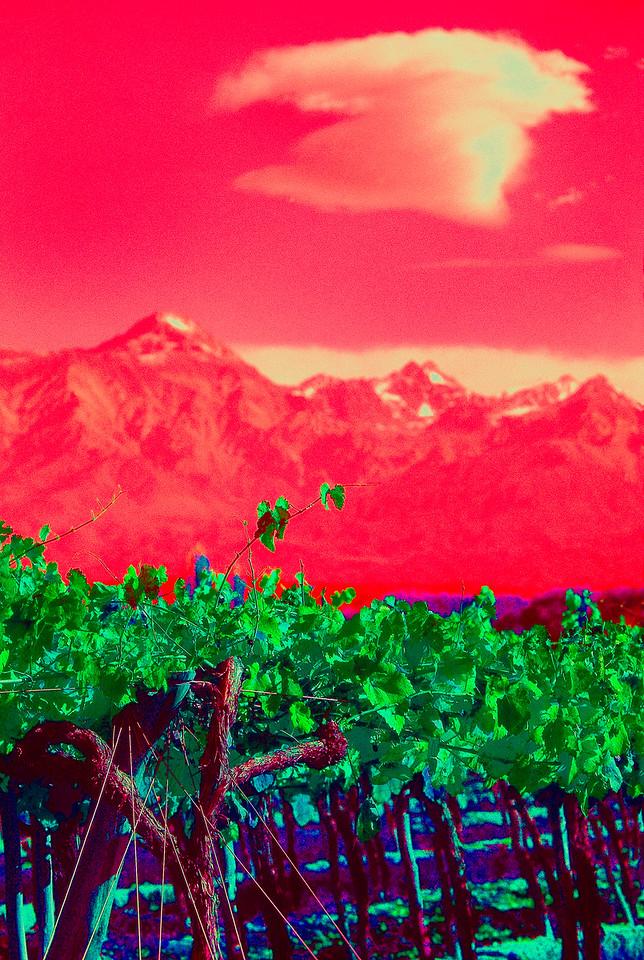 Viñas nubladas