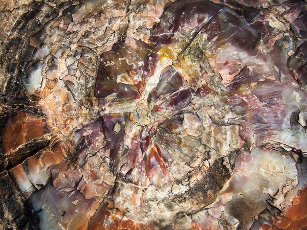 Tree Rings To Mosaic Stone