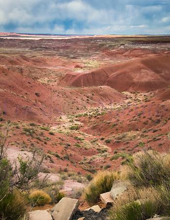 Desert Wandering