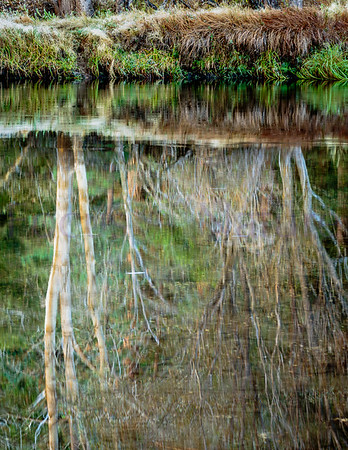 Bare Trees Reflection