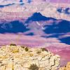 Agave utahensis var. kaibabensis overlooking the Grand Canyon, Grand Canyon National Park, Coconino County, Arizona