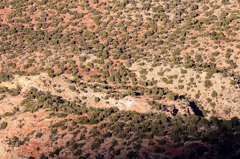 Pinyon-juniper forest, Grand Canyon National Park, Coconino County, Arizona