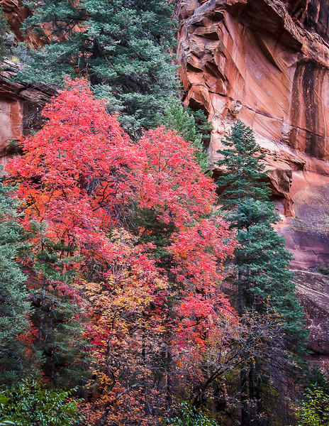 Red-Walled Canyon